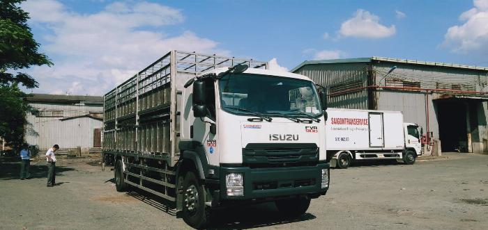 xe tải isuzu fvr900 8 tấn chuyên chở gia súc
